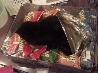 Sunchip kitty