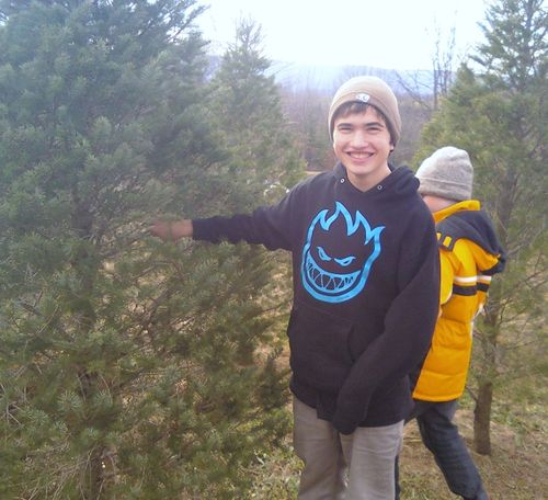 Tree pickin