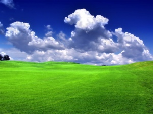 Green_grass_blue_sky_bliss (1)