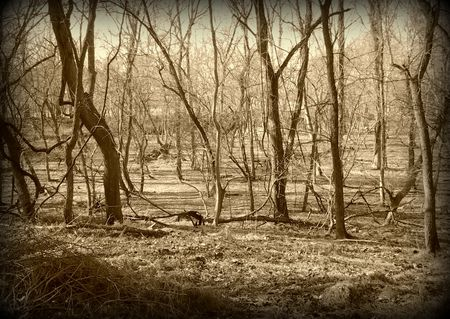 2012-01-01 the woods