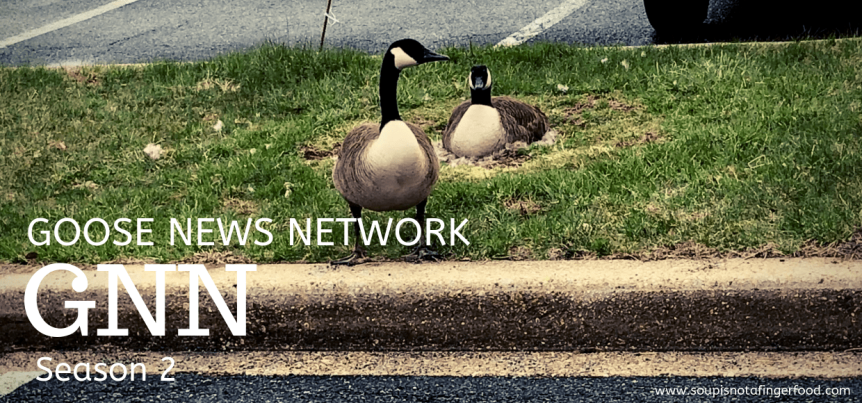 The Goose NewsNetwork